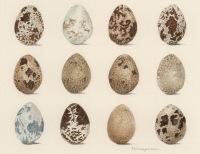 Trisha-Hayman-Eggs