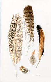 Trisha-Hayman-Lyme-Regis-Feathers