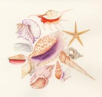 Trisha Hayman Shells
